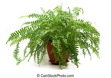 fern in a brown pot