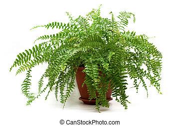 fern in a brown pot