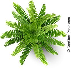 fern in a pot top view - Top view of houseplant fern in a...