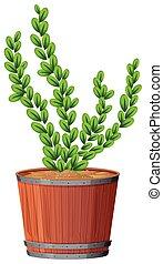 fern in plant pot