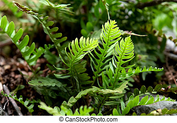 Fern in Shenandoah National park
