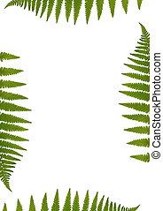 Fern Leaf Border - Green fern leaf border over white...
