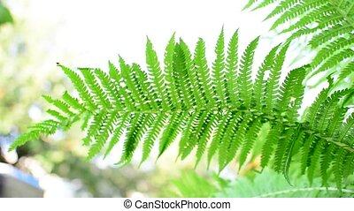 Fern leaf swaying in the wind.