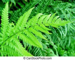 fern - leaf in a forest