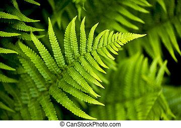 Fern leaf in spring
