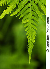 Fern leaf in the forest - green nature background