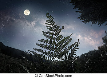 Fern leaf in the moonlight