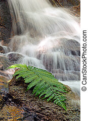 Fern leaf on a rocky with waterfall