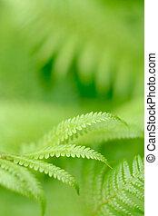 fern leaf - fern - frond with small depth of field