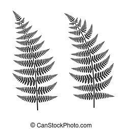 Fern Leaf Set on White Background. Vector Illustration