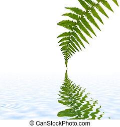 Fern Leaf Simplicity - One green fern leaf with reflection...