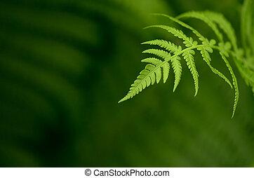 Fern leaf - Natural background with fern leaf