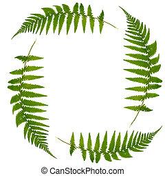 Fern Leaf Symbol - Four green fern leaves forming a square...