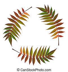 Fern Leaf Symbol - Three fern leaves in the colors of fall...