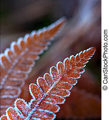 Fern leaf with ice crystals - Close up of fern leaf in brown...