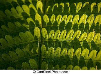 fern leafe close up for your design