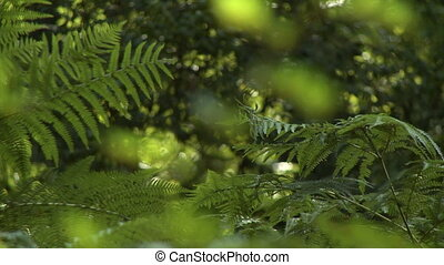 Fern Leaves and Branches - Steady, medium wide shot of fern...