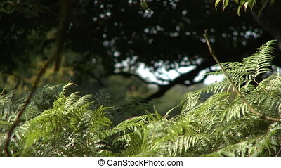 Fern Leaves and Large Tree - Steady, medium close up shot of...