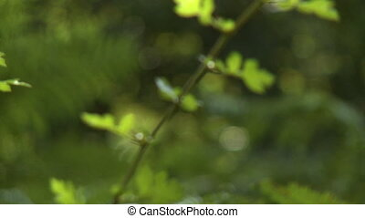 Fern Leaves and Single Branch - Steady, medium wide shot of...