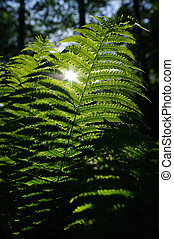 Fern leaves and sun in the forest