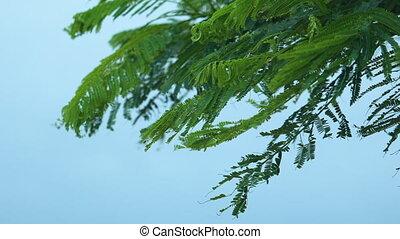 Fern leaves blown by the wind