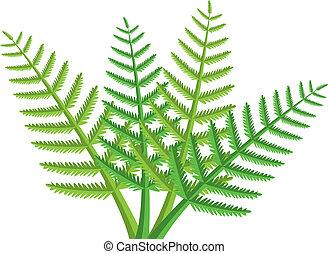 fern leaves - vector design of green fern leaves