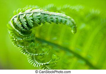 Fern leaves - Fresh green leaves of a fern in the blurry...