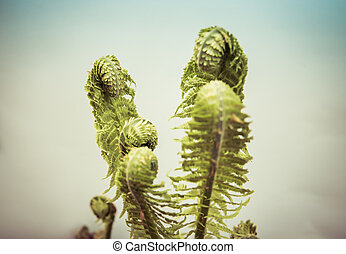 fern leaves isolated over white