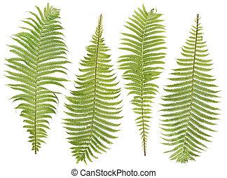 fern leaves set