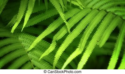 Fern leaves swaying in the tropical forest