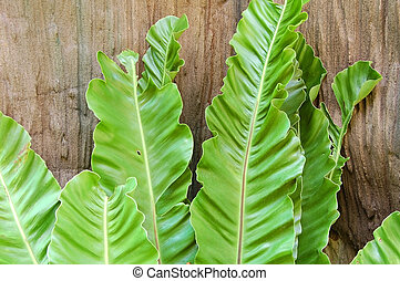 Tongue-like fern leaves against a wooden log