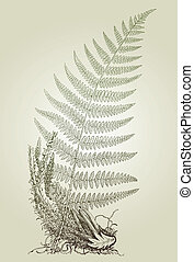 fern leaves, vector illustration - fern leaves, vector...