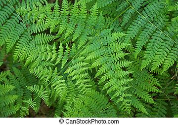 Lleaves of fern as background.