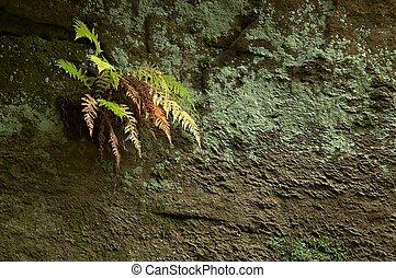 fern on a rock