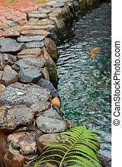 Fern on a rock by a pond