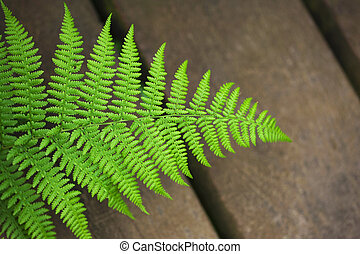Fern on a wooden floor