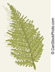 fern on biedge background
