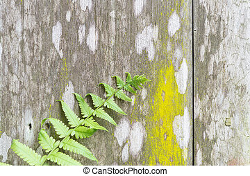 Fern on old wooden background