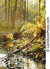 Fern on the bank of a stream in a forest illuminated by the sun