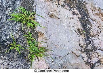 fern on the rock
