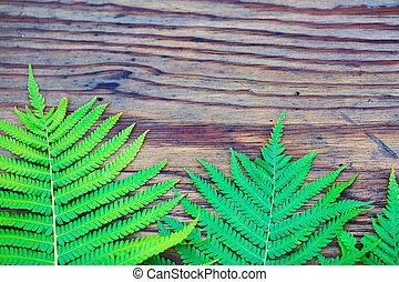 Fern on wooden background