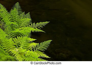 Fern River - Fern on the banks of the river flowing