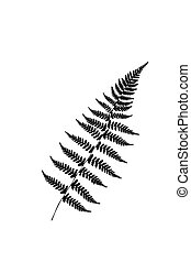 Fern sheet on a white background