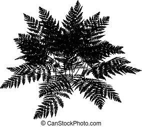 Fern silhouette - Silhouette of a fern plant