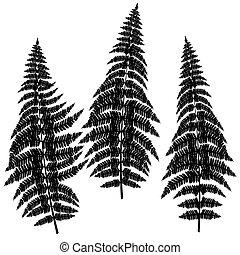 Fern silhouettes on white background