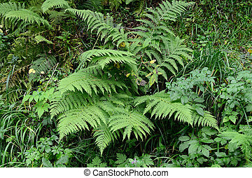 Fern and other plants in forest