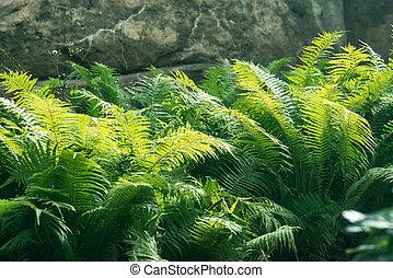 fern thicket