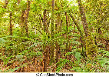 Fern tree rainforest wilderness Otago New Zealand
