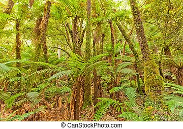 Fern tree rainforest wilderness Otago New Zealand