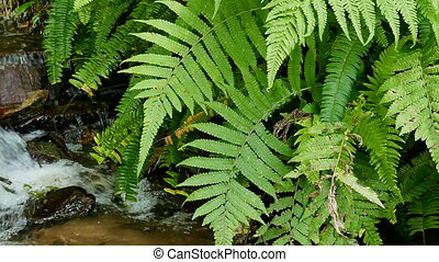 Ferns and  flowing water